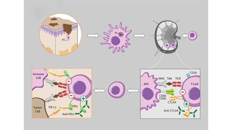 Разница между генной терапией и иммунотерапией