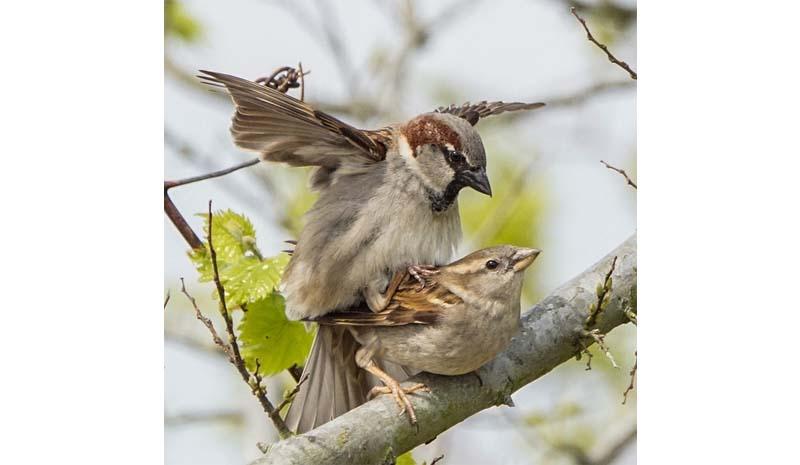 Разница между спариванием и размножением