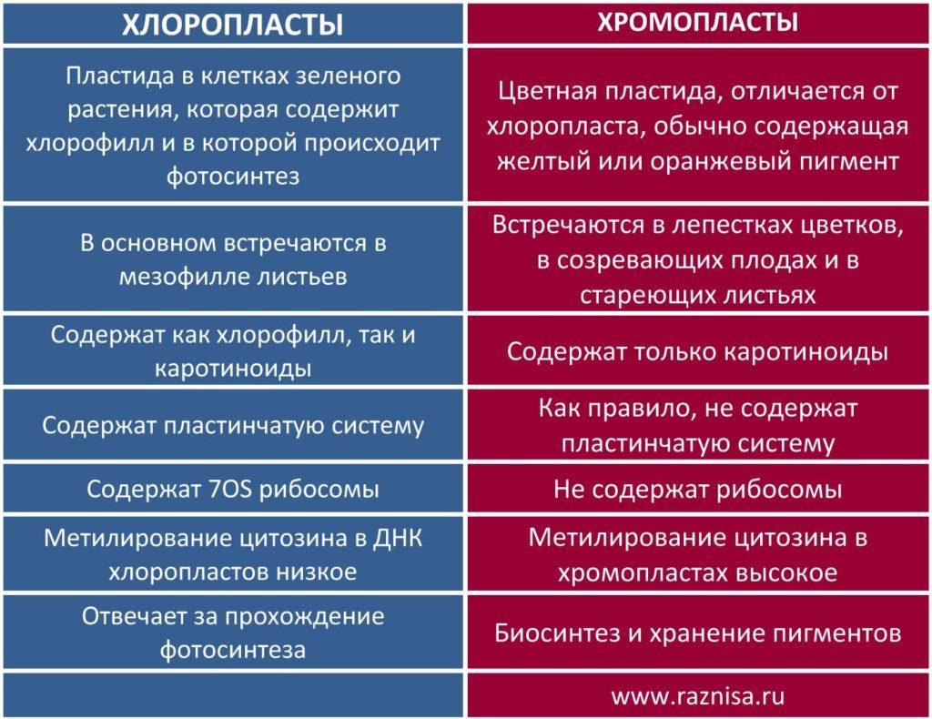Разница между хлоропластом и хромопластом