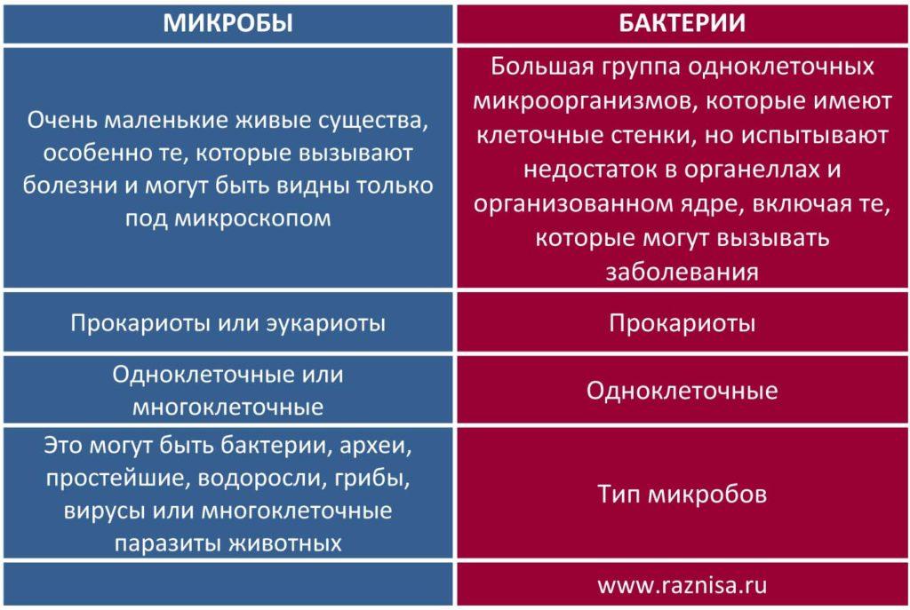 Разница между микробами и бактериями