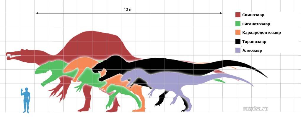 Сравнение Аллозавра и Тиранозавра с другими крупными тероподами и человеком