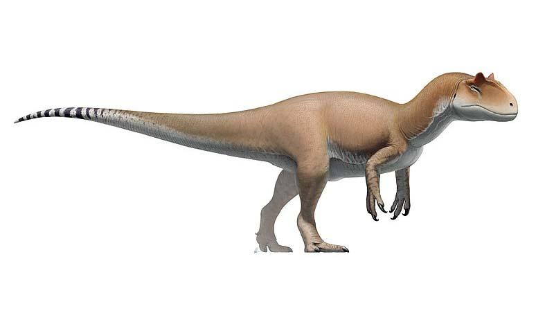 В чем разница между аллозавром и тиранозавром