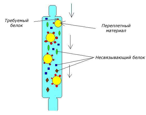 Аффинная хроматография как метод очистки