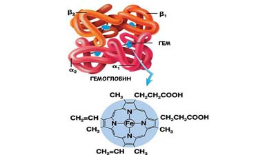 Разница между гемоглобином и гемоглобином A1c