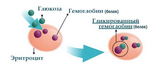 Гликозилирование белка