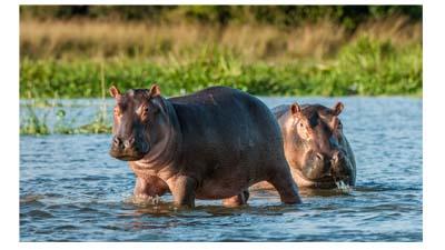 11 завораживающих растений и животных реки Нил