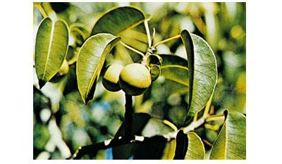 Опасных растений, которые вы никогда не должны трогать