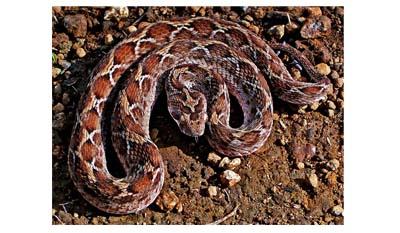 9 самых смертоносных змей в мире