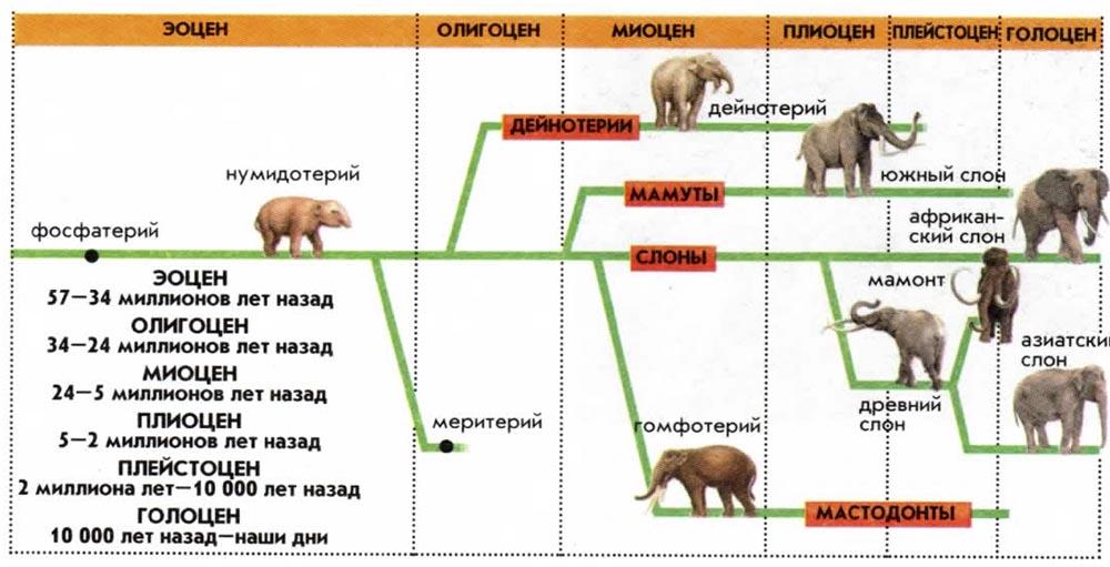 Эволюция современных слонов