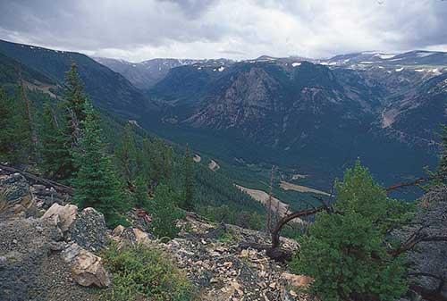 Лесистые склоны Медвежьих гор, Мон., В северных Скалистых горах
