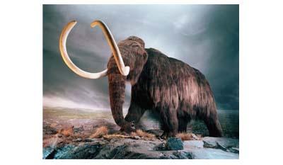 Мамонт — вымершее млекопитающее