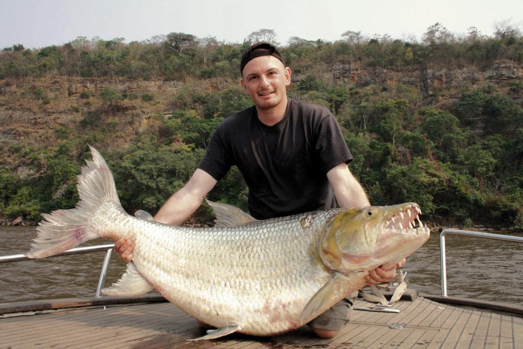 Мужчина держит Hydrocynus goliath, крупнейшего вида большой тигровой рыбы