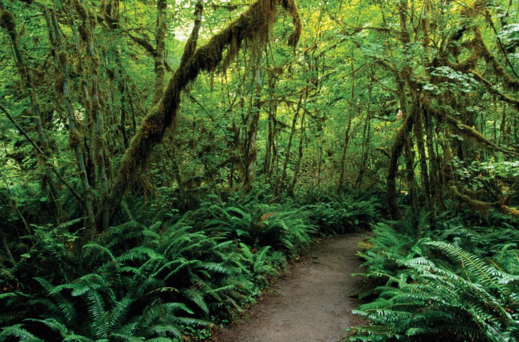 Олимпийский национальный парк, северо-западный Вашингтон, США