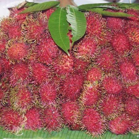 Плоды рамбутана (Nephelium lappaceum)