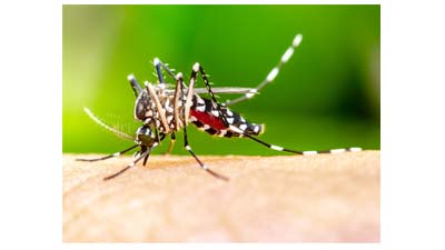 Почему укусы комаров зудят?
