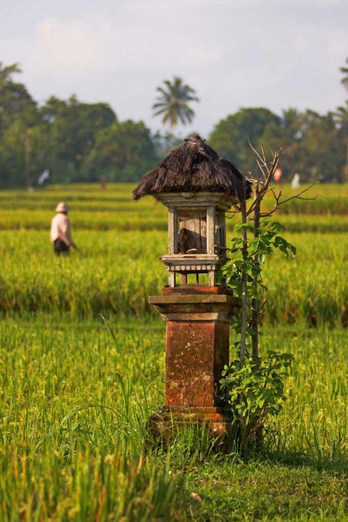 Праздник урожая на Бали в Индонезии