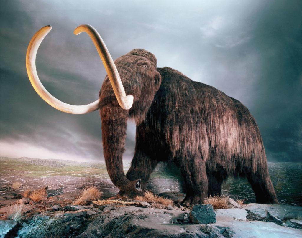 Реплика шерстистого мамонта, музей в Виктории, Британская Колумбия, Канада