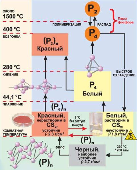 Аллотропы фосфора