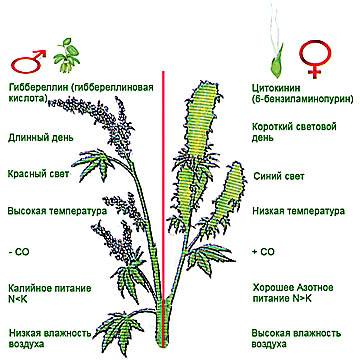 Гиббереллин и Цитокинин для растения
