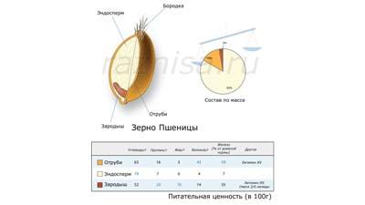 Разница между эндоспермом и периспермом