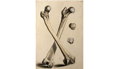 Разница между мужской и женской бедренной костью
