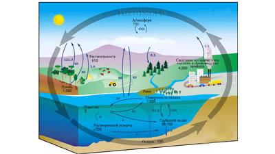 Разница между неорганическим и органическим углеродом