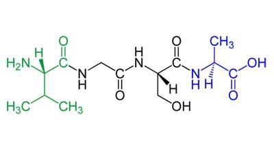 Разница между пептидом и дипептидом