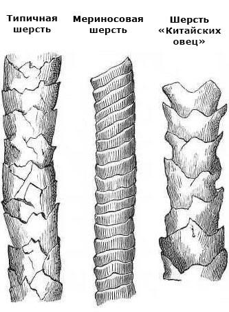 Типичная шерсть, Мериносовая шерсть и шерсть «Китайских овец»