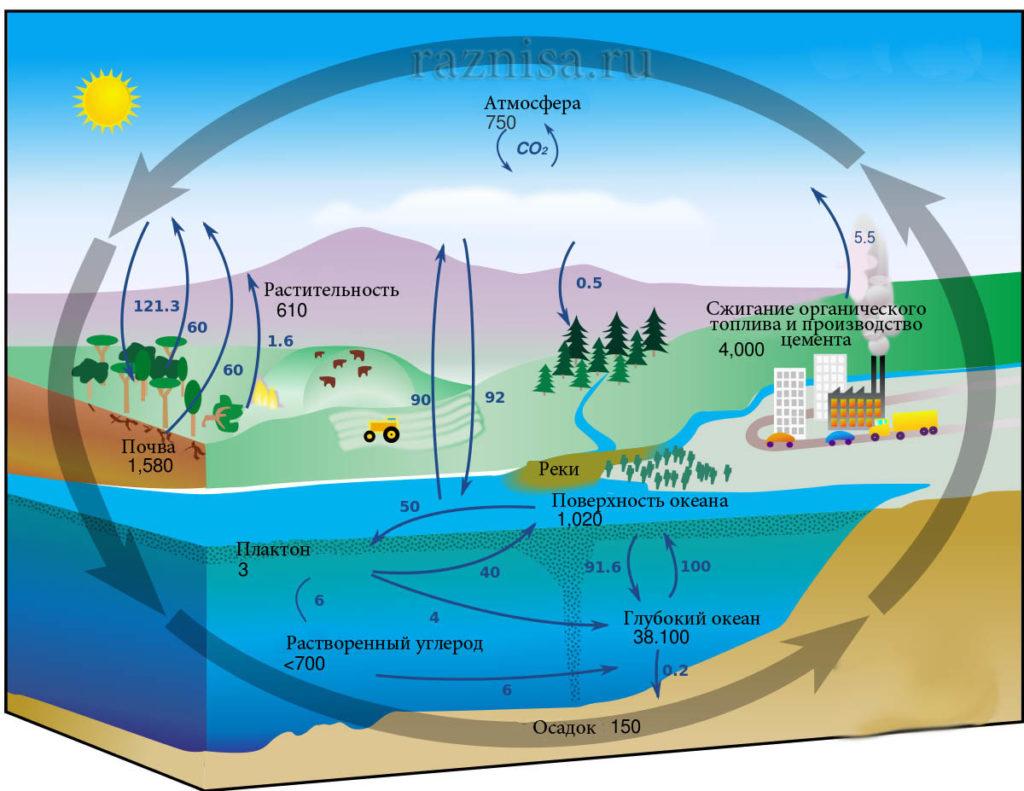 Круговорот углерода в природе, показывающий как органические, так и неорганические источники углерода