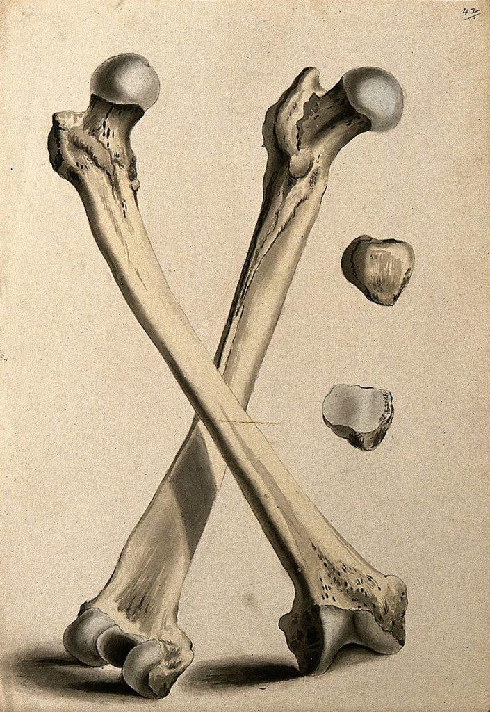 Женские бедренные кости