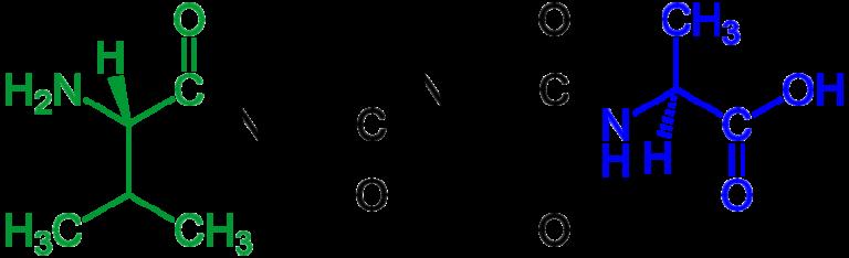 Тетрапептид имеет четыре аминокислоты, связанные друг с другом посредством трех пептидных связей