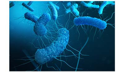 Разница между Колиморфными бактериями и Энтеробактериями