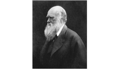 Разница между дарвинизмом и неодарвинизмом