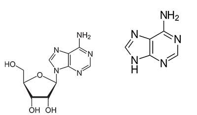 Разница между Аденозином и Аденином