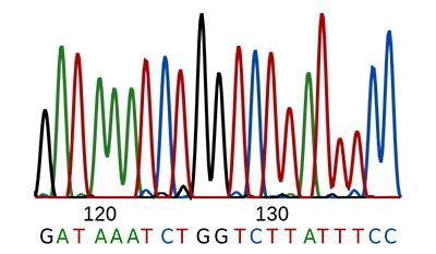 Разница между Последовательность оснований и Аминокислотной последовательностью