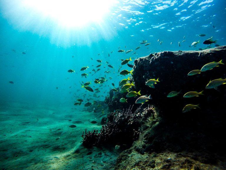 Фотическая зона океана