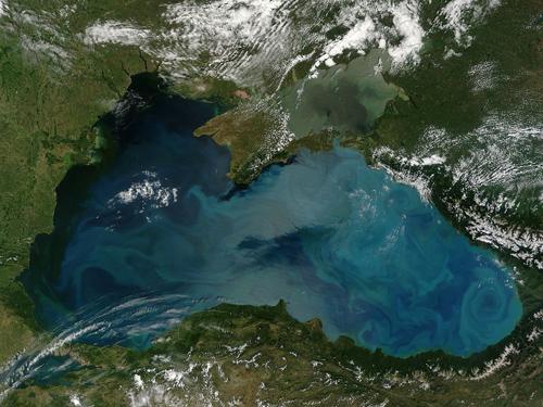Цветение водорослей в море