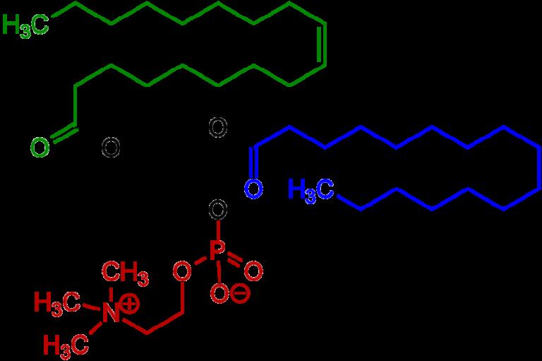 Химическая структура Фосфатидилхолина