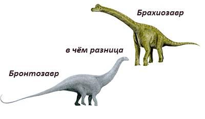 Разница между Бронтозавром и Брахиозавром