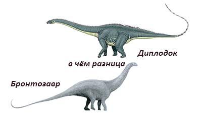 Разница между Бронтозавром и Диплодоком