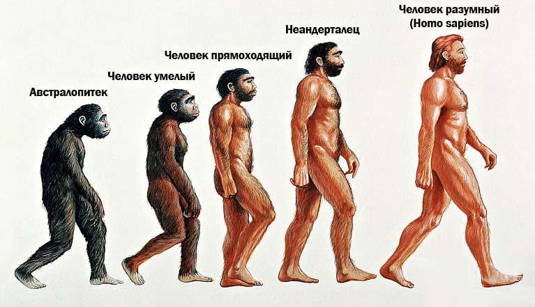 Этапы эволюции человека