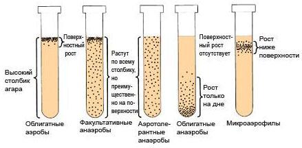 Идентификация Аэробных и Анаэробных бактерий по концентрации кислорода