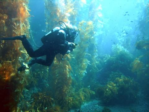 Водный биом - водоросли