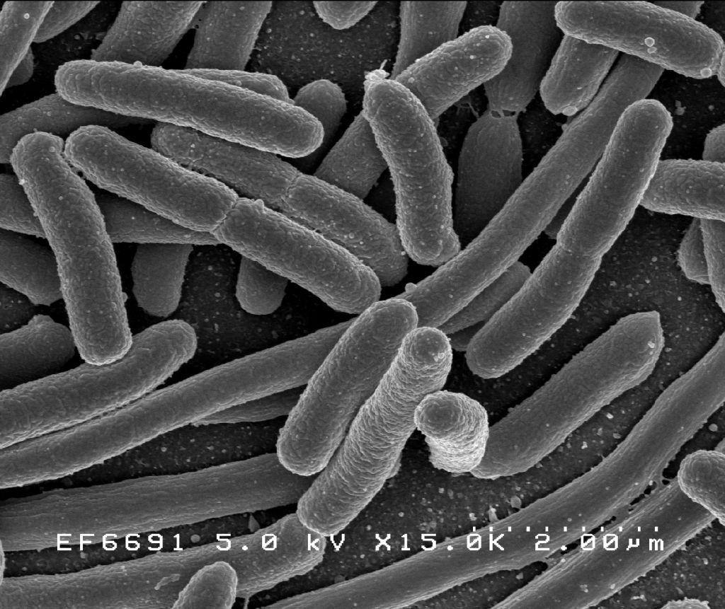 Протеобактерии