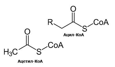 Разница между Ацетил-КоА и Ацил-КоА