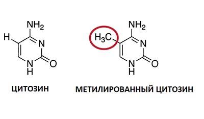 Разница между Ацетилированием и Метилированием