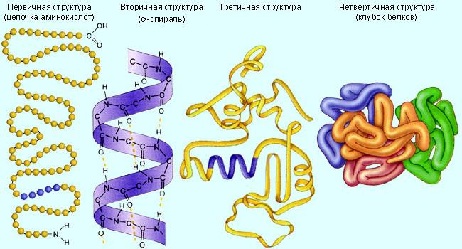 Уровни организации белковой структуры