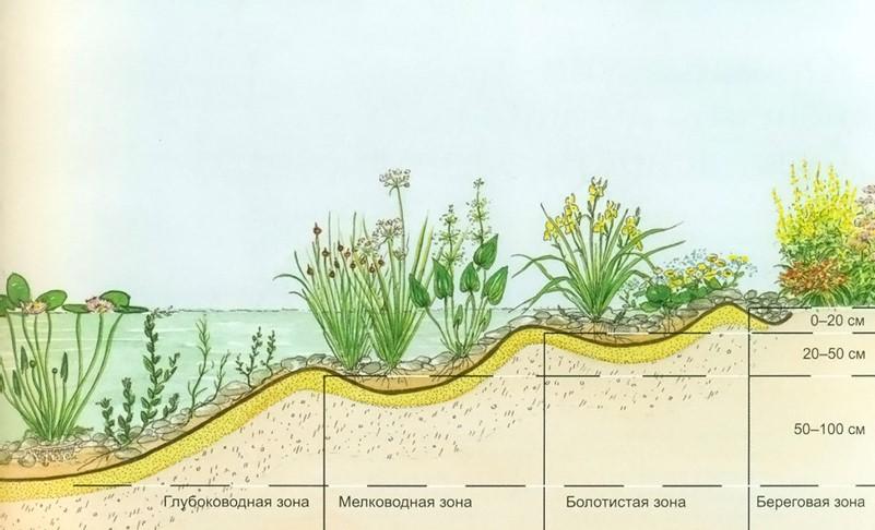 Места произрастания растений Гигрофитов