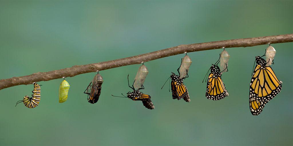 Полный метаморфоз на примере бабочки