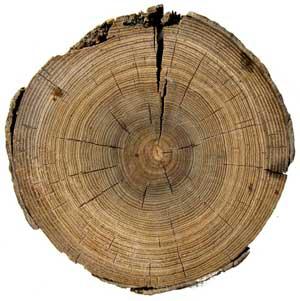 Годичные кольца дерева